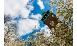 Carillon Tower with blossom